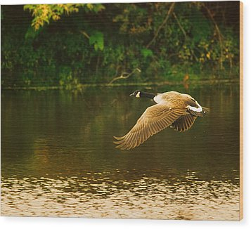 Midmorning Launch Wood Print by Susan Capuano