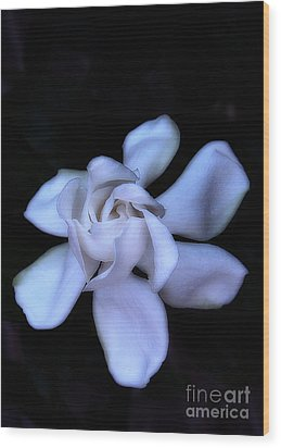 Midnight Gardenia Wood Print by Judi Bagwell