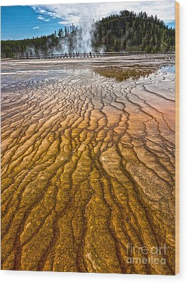 Midway Geyser Basin Spring In Yellowstone National Park Wood Print by Gregory Dyer
