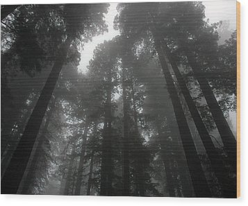 Mighty Redwoods Wood Print by Jonathan Schreiber