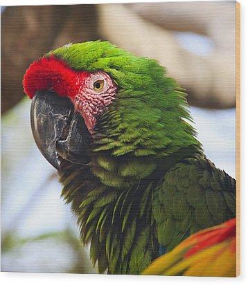 Military Macaw Parrot Wood Print by Adam Romanowicz