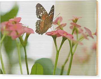 Wood Print featuring the photograph Milkweed Butterfly by MaryJane Armstrong