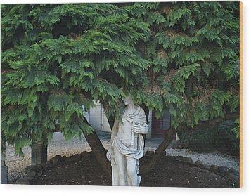 Mill Valley, California, Usa Tree Wood Print by Keenpress