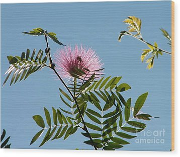 Mimosa Flower  Wood Print by Theresa Willingham