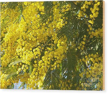 Wood Print featuring the photograph Mimosas by Sylvie Leandre