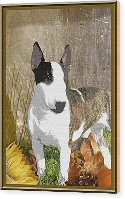 Minature Bull Terrier Wood Print by One Rude Dawg Orcutt
