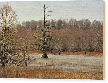 Mingo Swamp 1 Wood Print by Marty Koch