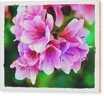 Miniature Azaleas Wood Print by Judi Bagwell