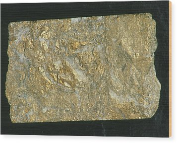 Mining Drill Core Sample With Gold Content Wood Print by Kaj R. Svensson