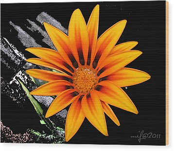 Miracle Of A Flower Wood Print by Maciek Froncisz