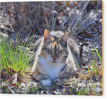 Miss Kitty Wood Print by Al Powell Photography USA