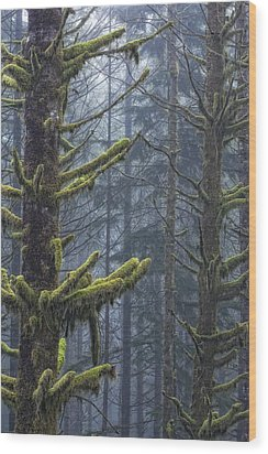 Misty Mystical Moss Forest Wood Print by Paul W Sharpe Aka Wizard of Wonders