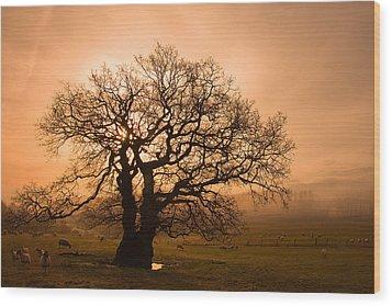 Misty Oak Wood Print by Kris Dutson