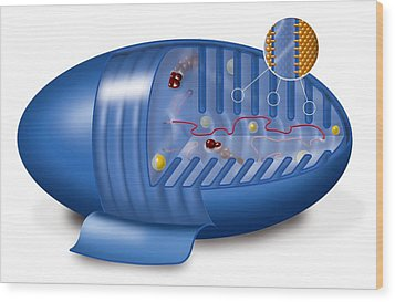 Mitochondrion, Artwork Wood Print by Art For Science