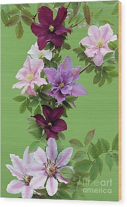 Mixed Clematis Flowers Wood Print by Archie Young