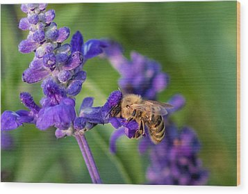Wood Print featuring the photograph Mmmm Honey by Tom Gort