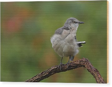 Wood Print featuring the photograph Mocking Bird Perched In The Wind by Daniel Reed