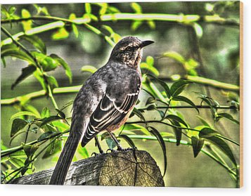 Mocking Bird Picture 2 Wood Print by Ester  Rogers