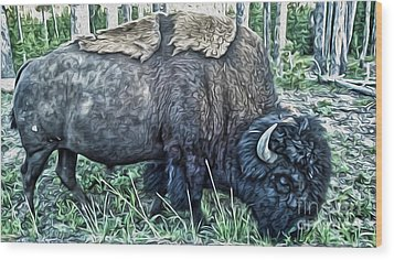 Molting Bison In Yellowstone Wood Print by Gregory Dyer