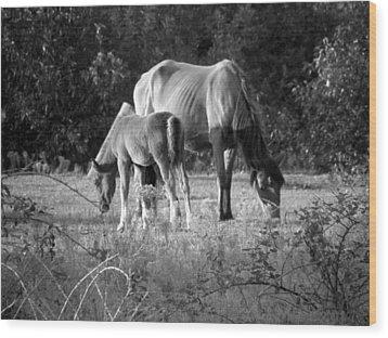 Mom And Foal Grazing At Sunset Wood Print by Kim Galluzzo Wozniak