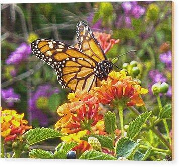 Monarch At Lantana Wood Print