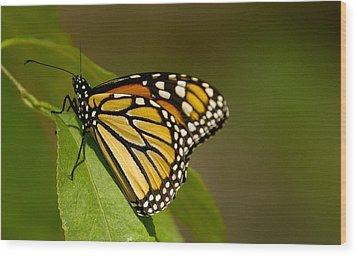 Monarch Beauty Wood Print by Dean Bennett