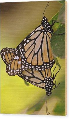 Monarch Bliss Wood Print by Marty Koch