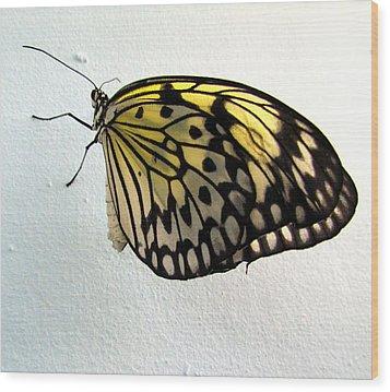 Monarch Butterflie Wood Print by Joyce Woodhouse