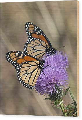 Wood Print featuring the photograph Monarch Butterflies On Field Thistle Din162 by Gerry Gantt