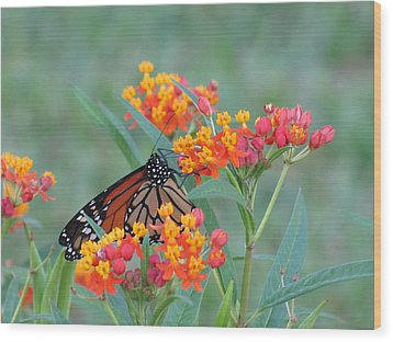 Monarch Butterfly Closeup Wood Print