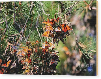 Monarch Butterfly Gathering Wood Print by Tap On Photo