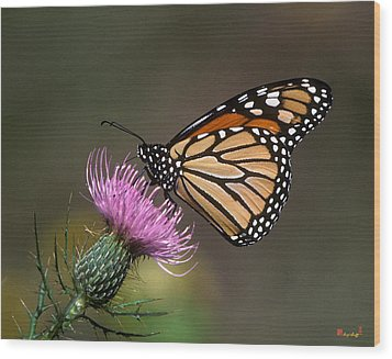 Wood Print featuring the photograph Monarch Butterfly On Thistle 13a by Gerry Gantt