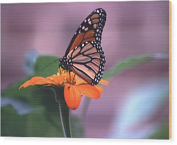 Wood Print featuring the photograph Monarch Butterfly On Tithonia Sunflower by Tom Wurl