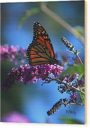 Monarch Butterfly Wood Print by Patrick Witz