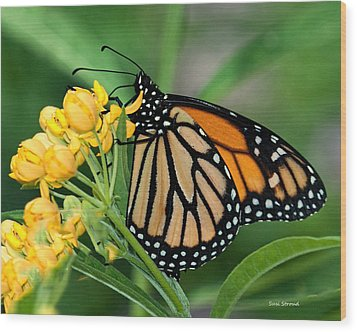 Wood Print featuring the photograph Monarch Butterfly by Susi Stroud