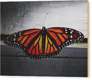 Monarch Wood Print by Julia Wilcox