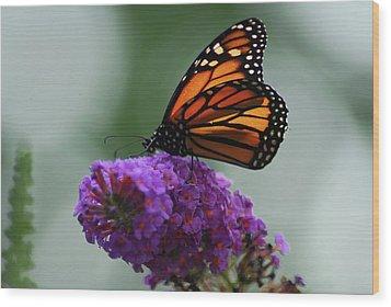 Monarch On Purple Wood Print