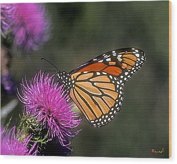 Monarch On Thistle 13f Wood Print by Gerry Gantt