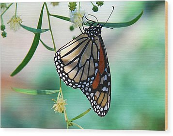 Wood Print featuring the photograph Monarch by Tam Ryan