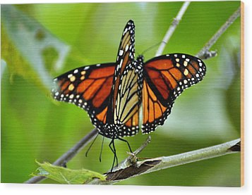 Monarchs Deluxe Wood Print by Marty Koch