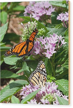 Wood Print featuring the photograph Monarchs by Susi Stroud