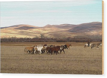 Mongolian Horses Wood Print by Diane Height