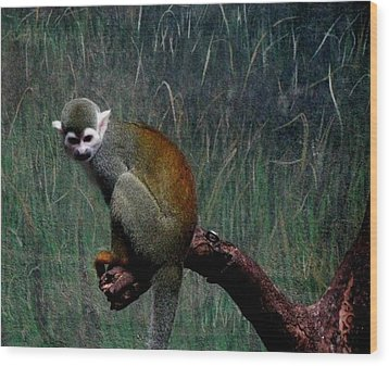 Wood Print featuring the photograph Monkey by Maria Urso