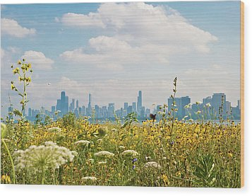 Montrose Harbor's Bird Sanctuary Wood Print by by Rolour Garcia