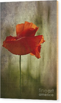 Wood Print featuring the photograph Moody Poppy. by Clare Bambers - Bambers Images