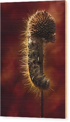 Moody Red Tent Caterpillar Wood Print by Bill Tiepelman