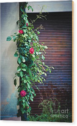 Moody Roses Wood Print by Silvia Ganora