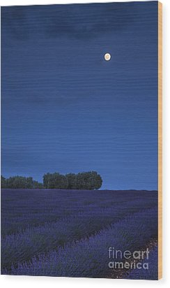 Moon Over Lavender Wood Print by Brian Jannsen