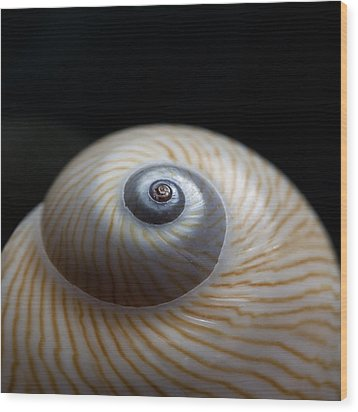 Moon Shell Wood Print by Carol Leigh