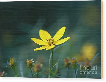 Wood Print featuring the photograph Moonbeam Coreopsis by Denise Pohl